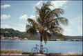 Palm Tree & Bike